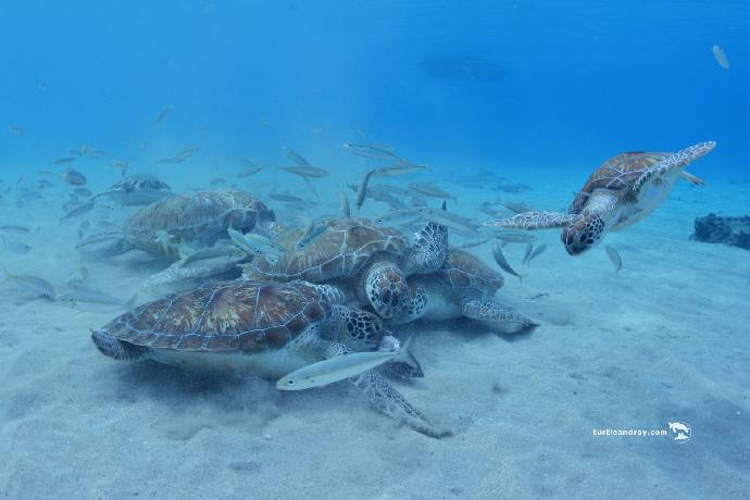 DSC-1208Turtle-Ray-Productions-Curacao.jpg