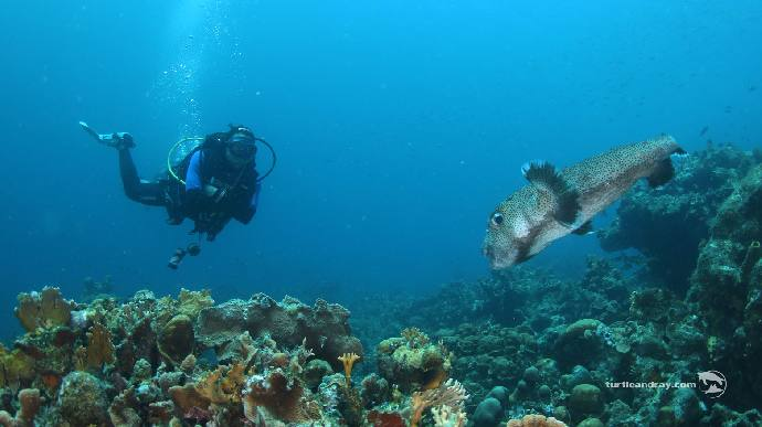IMG-5648Turtle-Ray-Productions-Curacao.jpg
